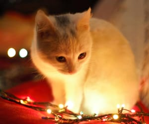 cat, animals, and lights image