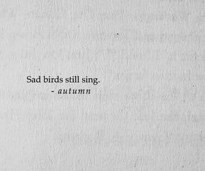 quotes, bird, and sad image