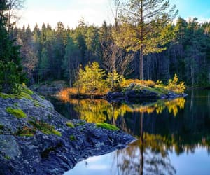 forrest, lake, and nature image