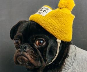 amarillo, animals, and dog image