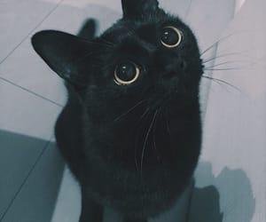 black, cat, and pet image