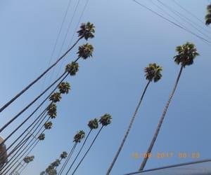 blue, la, and palm trees image