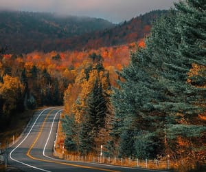 fall, road, and nature image