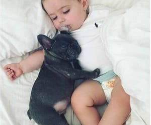 baby boy, french bulldog, and puppy image