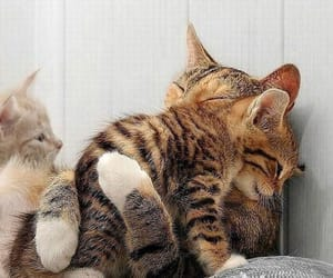 cat, cute, and hug image
