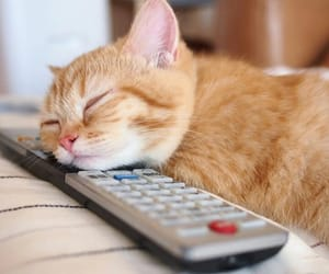 animal, busy, and cat image