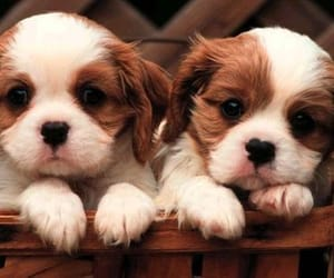 mydogs and like my dogs image