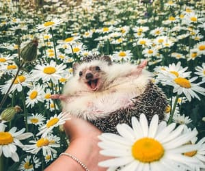 flowers, cute, and animal image
