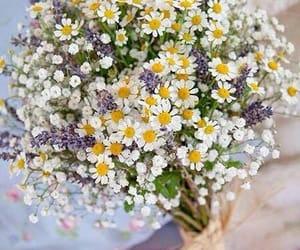 fiori, compleanno, and margherite image