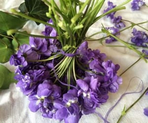 pansies, violettes, and Toulouse image