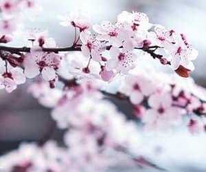 beautiful, petals, and bloom image