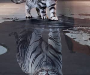 cat, tiger, and wallpaper image