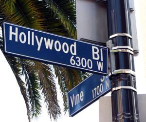 palm tree, sign, and hollywoodbl image
