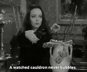 carolyn jones, gif, and Morticia Addams image