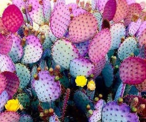 cactuses, pink, and cute image
