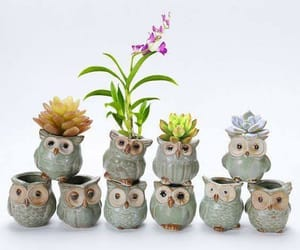 cactuses, owl, and cute image