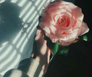 rose and tumblr image