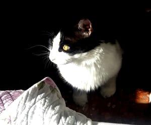 cat, DIA, and gato image