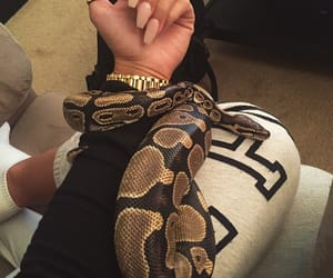 snake, nails, and animal image