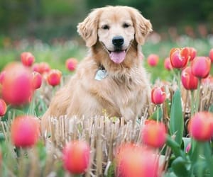 pet and cute image