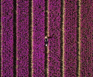 aerial photography, aerial view, and purple image