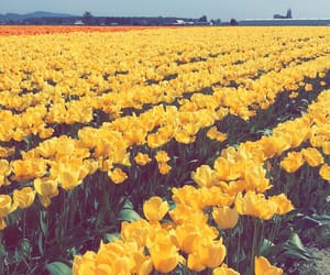 field, nature, and petals image