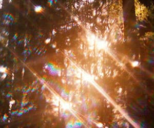 gif, aesthetic, and forest image