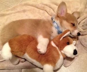 Step Dog Animal And Puppy Image Litlepups 27 Images About Kawaii Animals On We Heart It See More About