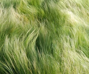 garden, grass, and green image