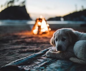 dog, fire, and beach image