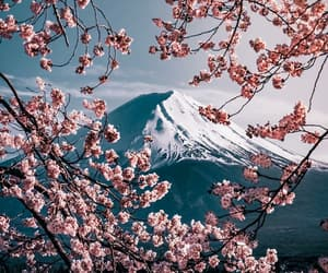 flower, japan, and landscape image