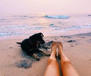 summer, beach, and dog image