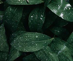 botanic, botânica, and folhas image