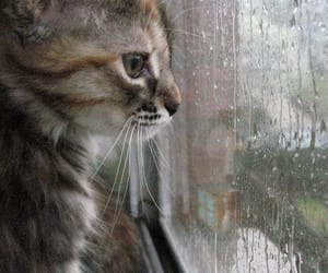 cat, rain, and pet image
