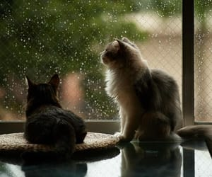 pet, rain, and aesthetic image
