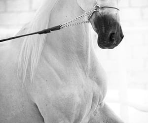 beauty, horse, and white image