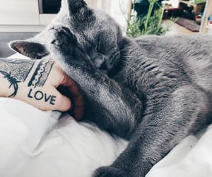 aesthetic, animal, and grey image