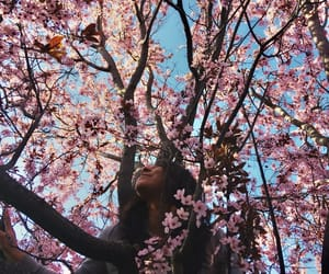 boho, cherry blossoms, and flowers image