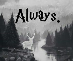harry potter, always, and wallpaper image