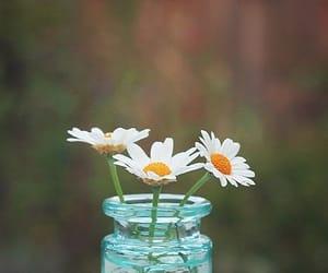 aesthetic, vase, and daisy image