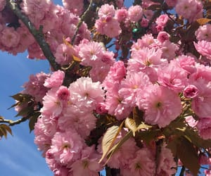 beautiful, blossom, and flower image