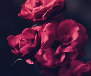 flowers, background, and dark image