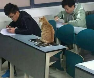 cat, divertido, and funny image
