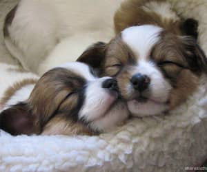 sleepy pups sooooo cute