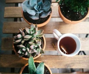 plants, tea, and cactus image