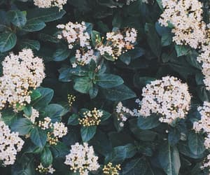 floral, rural, and wallpaper image