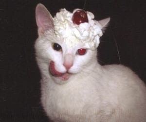 cat, cherry, and animal image
