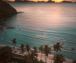 beach, summer, and palmtrees kép