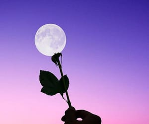 moon, rose, and flowers image