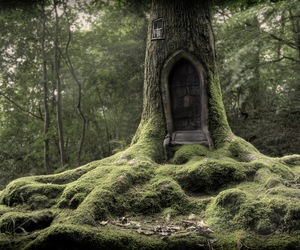 beautiful, Fairies, and forest image